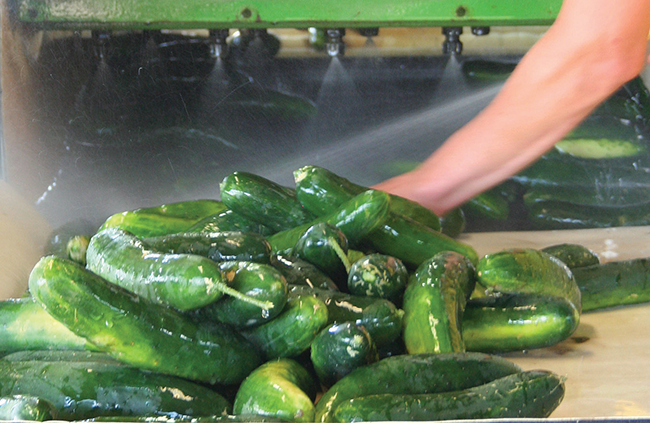 Vegetable Growers Get Ready to Meet New Food Safety Rule